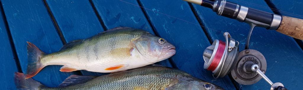 Saison de pêche 2020 – Lac du Bourget et ses rivières – Les pêcheurs chambériens